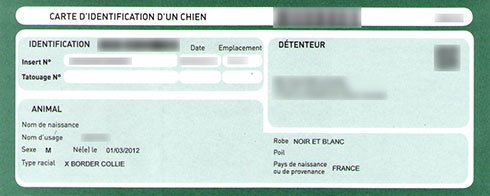centrale canine carte d'identification
