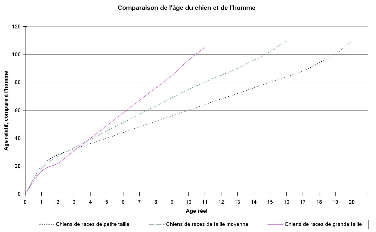 Age Reel Chien age du chien et équivalence avec l'âge humain - chien nozamis