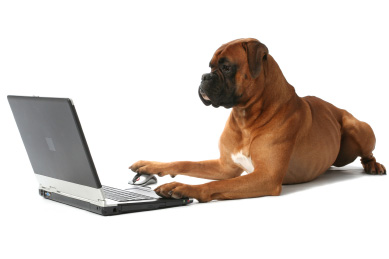 Portail du chien : tout savoir sur les chiens et le monde canin avec Nozamis les chiens